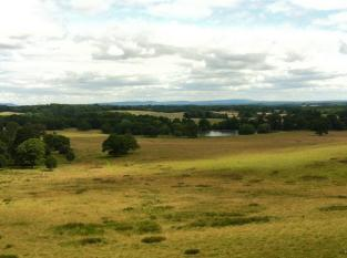 Petworth Park Walk