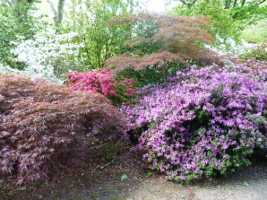 Day Trip to Exbury Gardens, New Forest
